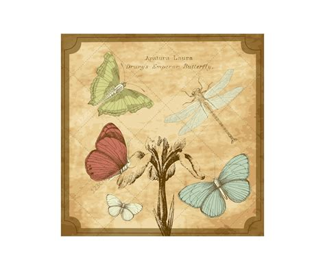 vintage butterfly vector illustrations drawing