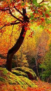 autumn, forest, trees, landscape | Forest | Pinterest
