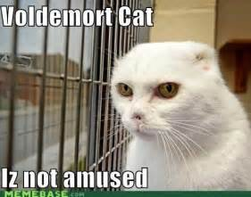 harry potter cat names voldemort cat iz not amused sayings and quotes