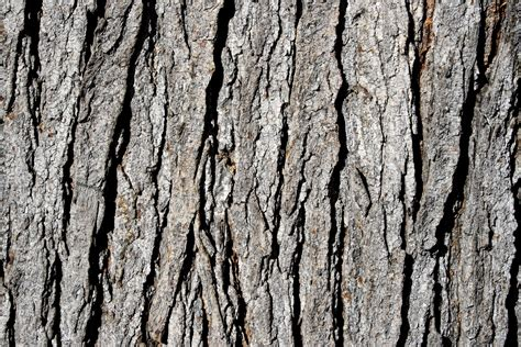 bark of tree pin by kimberly wies on outdoors tree tree tree pinterest tree bark barking f c and