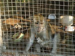 zoo monkeys cages animals closed being investigation down mail aware distress immediately sabah decided wildlife act department following