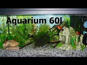 Aquarium Einrichten 60l : my fish 60 liter aquarium fische youtube ~ Michelbontemps.com Haus und Dekorationen