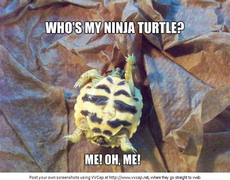 Funny Turtle Memes - nearly wordless wednesday ninja turtle becoming cliche