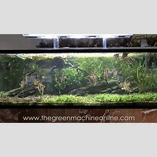 Aquascaping Shop Tour Of The Green Machine Youtube