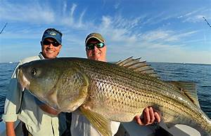 Great Captain Island Light Block Island Stripers On The Water