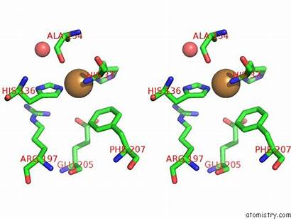 Copper Cu Binding Polysaccharide Chitin Japonicus Monooxygenase