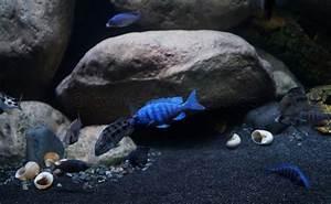 Aquarium Gestaltung Bilder : malawi sandzone malawisee aquarium ~ Lizthompson.info Haus und Dekorationen