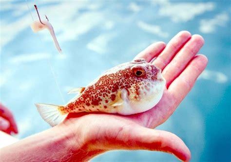 pufferfish ocean treasures memorial library