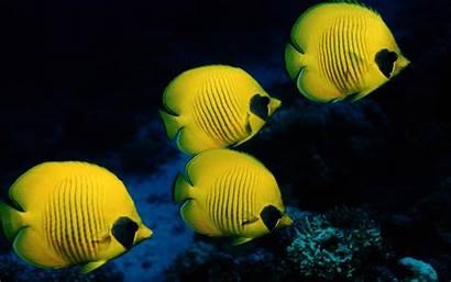Fish Desktop Wallpapers Yellow Ocean Sea Fishes