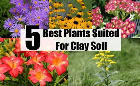 what plants like clay soil 5 best plants suited for clay soil diy home life creative ideas for home garden