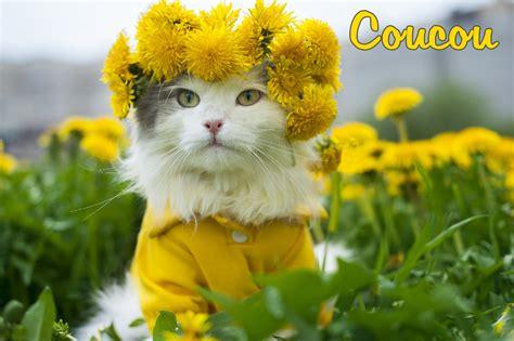 Carte Postale Gratuite by Cartes Virtuelles Coucou Gratuite Joliecarte