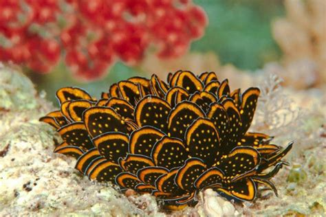 diving  nudibranchs dive  world creature features
