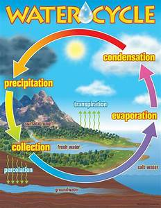 Trend Enterprises The Water Cycle Learning Chart