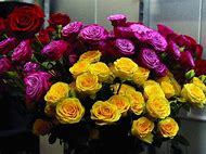 Purple and Yellow Roses Flowers