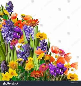 Spring Flowers Background Stock Photo 92227132 - Shutterstock
