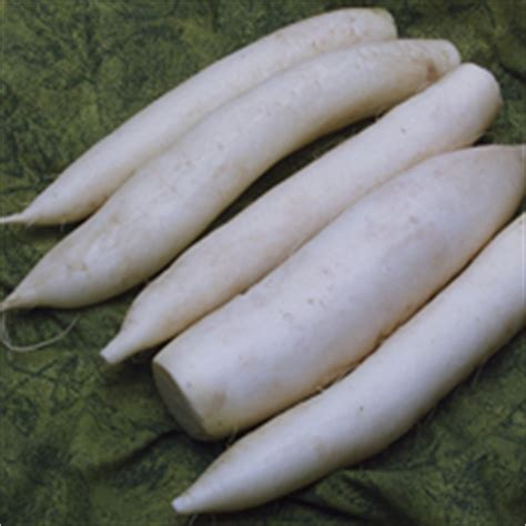 The Nibble Root Vegetable Types