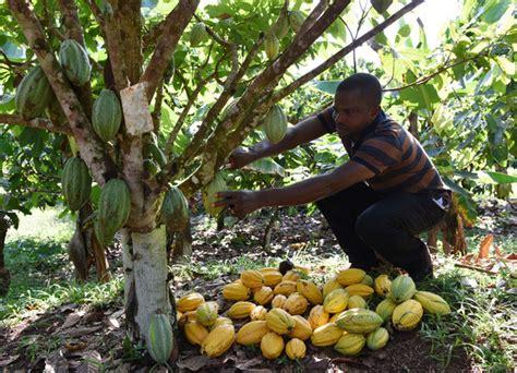 siege d eglise abidjan devient capitale mondiale du cacao la croix