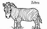 Zebra Coloring Pages Printable sketch template