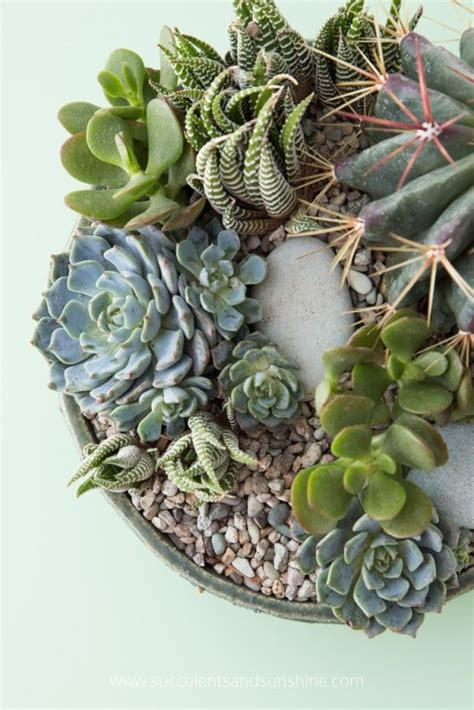 succulents in water how to water succulent plants growing succulents dressing and the o jays