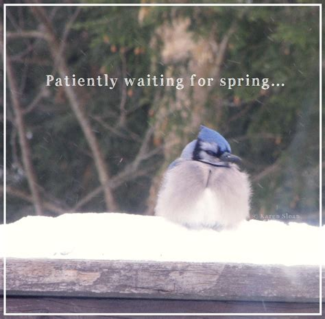 quotes waiting  spring quotesgram