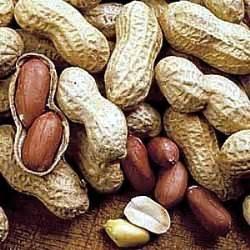 Amazon.com : Virginia Peanut 20 Seeds - Start Indoors in ...