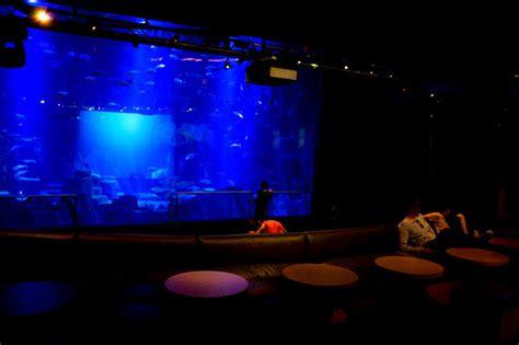 spectacles pour enfants parcs loisirs trocad 233 ro aquarium cin 233 aqua