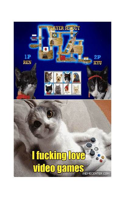 Cat Meme Zanzibar Message Likes