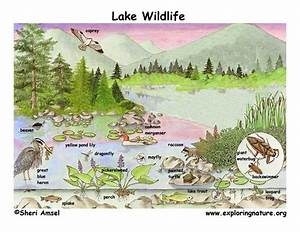 Northern Ponds  U0026 Lakes