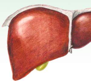dieta  disintossicare il fegato funzionamento  linee