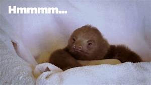 Baby Sloth GIFs - Find & Share on GIPHY