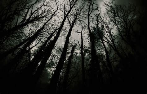 Dark Forest Lucatuosto Art Print