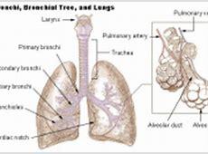 Chronic obstructive pulmonary disease The Full Wiki