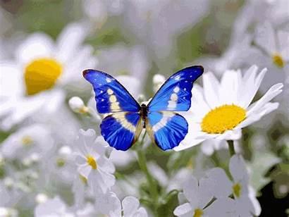 Papillon Centerblog Tags