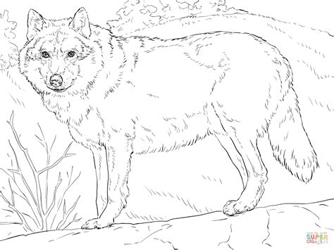 grey wolf coloring page  printable coloring pages
