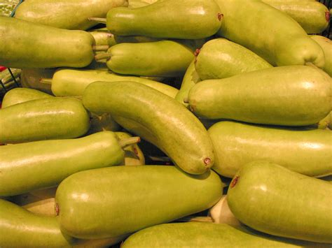 asian squash  stock photo picture image asian