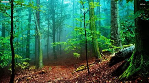 Free Green Forest Background by A Free Foggy Forest Wallpapers In Hd For Your