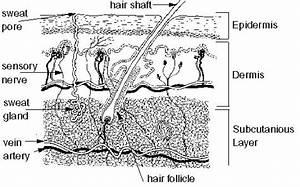 Skin Diagram