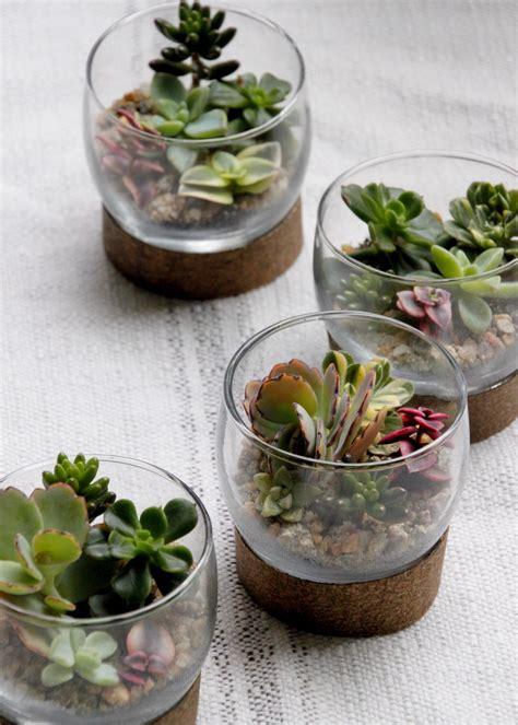 succulent terrariums hgtv
