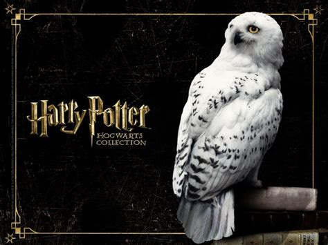 Harry Potter Wallpaper Hedwig Owl by Hp Hogwarts Collection Harry Potter Wallpaper 37536647