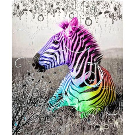Rainbow Zebra Print Bedroom Decor by 14 Best Images About Rainbow Zebra Bedroom On