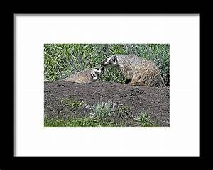 Safety Check Framed Print By Eric Nelson