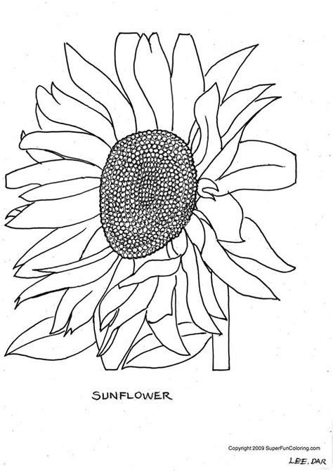 sunflower color sheets   clip art