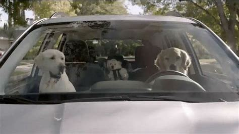 Subaru Car Commercial With Dogs