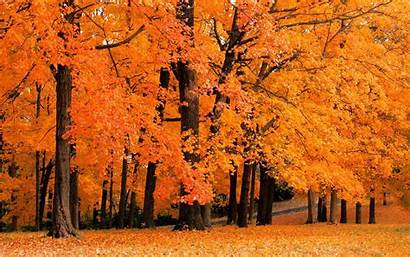 Fall Desktop Foliage Wallpapers Backgrounds