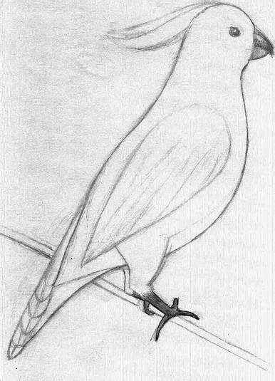 easysketchesofanimals golden crested cockatoo