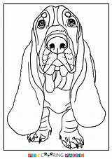 Hound Basset Coloring Pages Sheets Printable Getdrawings Getcolorings sketch template