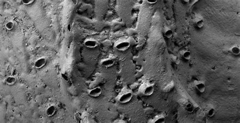found fossil extinct alive zealand