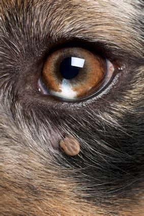un oeil hypermetrope exercice vous avez dit piroplasmose chien tion