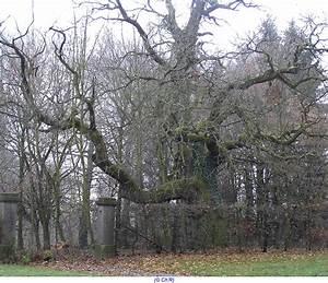 Comment Creuser Un Tronc D Arbre : comment arreter la croissance d un arbre ~ Melissatoandfro.com Idées de Décoration