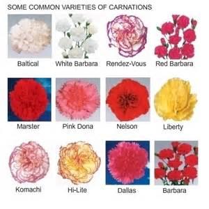 florist dallas fresh cut carnation